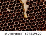 honey that flows on the wax     ... | Shutterstock . vector #674819620