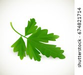 fresh green parsley on a white... | Shutterstock .eps vector #674821714