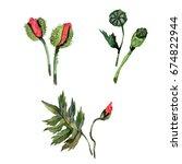 wildflower poppy flower in a... | Shutterstock . vector #674822944
