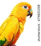 Yellow Brazilian Parrot...