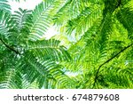 tropical plant | Shutterstock . vector #674879608