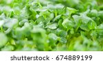 cress on a vintage background... | Shutterstock . vector #674889199