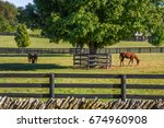 Small photo of Horses feeding on green grass inside wooden fences In thoroughbred country, Lexington, Kentucky, USA