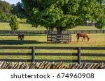 Small photo of Horses feeding on green grass inside wooden fences In thoroughbredcountry, Lexington, Kentucky, USA