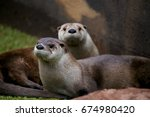 Pair Of River Otters