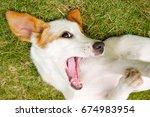 Stock photo happy dog 674983954