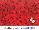 Stock photo creative background made of red flower and butterfly flat lay flat lay flower concept petunia 674985880