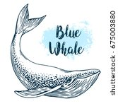 hand drawn blue whale vector...