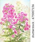 phloxes in watercolor  purple... | Shutterstock . vector #675007156