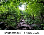 walk way in to the jungle... | Shutterstock . vector #675012628