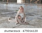 A Monkey Hold Her Baby. Mother...