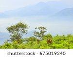 good morning  at san shiang tai ...   Shutterstock . vector #675019240