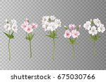flowers alstroemeria on a white ... | Shutterstock .eps vector #675030766