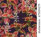 coleus flowers seamless pattern....   Shutterstock . vector #675034279