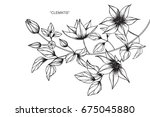clematis flowers drawing and... | Shutterstock .eps vector #675045880