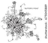 bouquet of butterfly pea... | Shutterstock .eps vector #675045889