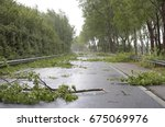 Many Fallen Trees On The...
