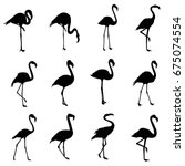 flamingo silhouette  vector ... | Shutterstock .eps vector #675074554