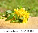 common st. john's wort blooming ... | Shutterstock . vector #675102133