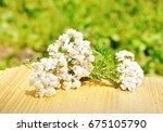 Milfoil Herbal Medicine  ...