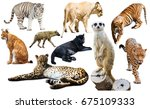 Set of wild mammals isolated...