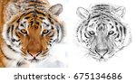 Photo Of A Tiger Portrait And...