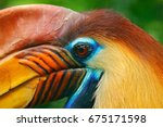 orange and blue bird head.... | Shutterstock . vector #675171598