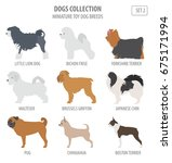miniature toy dog breeds... | Shutterstock .eps vector #675171994