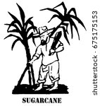 sugarcane. the farmer chops the ... | Shutterstock . vector #675175153