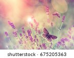 Stock photo butterfly flying over lavender flower butterflies on lavender flower 675205363