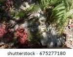 pink flowers in the mountains... | Shutterstock . vector #675277180
