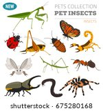 pet insects breeds icon set...