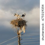 Small photo of Family of storks. Parents feed chicks in their nest - Banya, Bulgaria