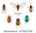 Set Of Tropical Insects Vector...