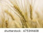 golden wheat field close up... | Shutterstock . vector #675344608