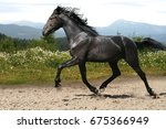 The Black Stallion Flies...