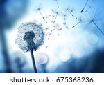 dandelion seeds blowing in the... | Shutterstock . vector #675368236