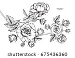 rose flowers drawing and sketch ... | Shutterstock .eps vector #675436360