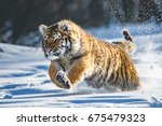 siberian tiger in the snow ... | Shutterstock . vector #675479323