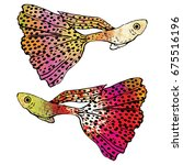 colorful guppy fish vector. two ... | Shutterstock .eps vector #675516196
