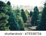 Stock photo trees in rows at a christmas tree farm 675538726