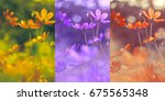 collage of three photos with... | Shutterstock . vector #675565348