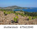 coastal landscape field of...