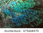 beautiful peacock fetcher for... | Shutterstock . vector #675668470