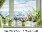 House Plants On Window. Orchid...