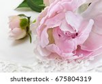 beautiful pink peony on a white ...   Shutterstock . vector #675804319