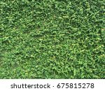 wall of green leaves for... | Shutterstock . vector #675815278