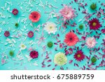 colored asters on canvas....   Shutterstock . vector #675889759