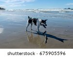 dog playing on the beach | Shutterstock . vector #675905596
