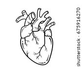 Anatomical Heart Line Art...